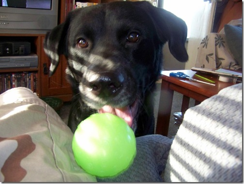 Throw the ball, throw the ball, THROW THE BALL!
