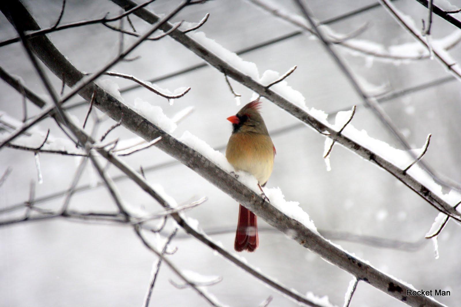 Slide Show Of Some Of My Bird Photos >> More Birds The Pine Ridge Philosopher