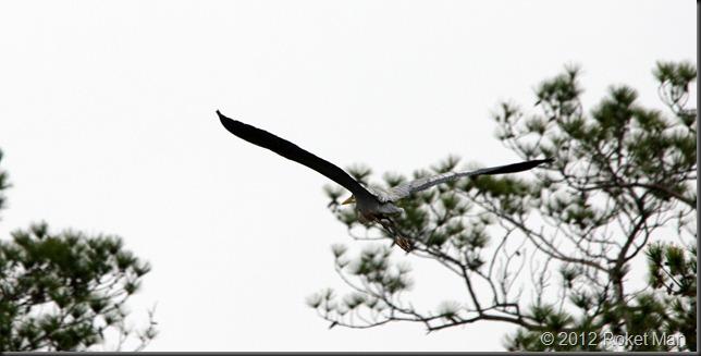 Heron 8