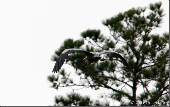 Heron 7